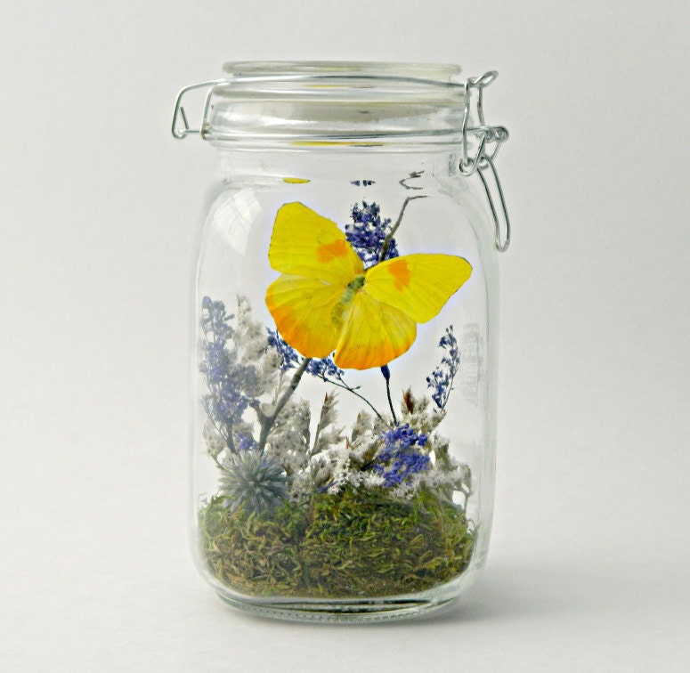 how to make a butterfly terrarium