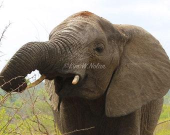 Elephant Photograph, Elephant photography, African elephant photo, Wildlife Photography, Wild African Animals, Safari, Wildlife, Africa