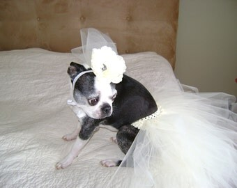 Dog Wedding Dress and Veil