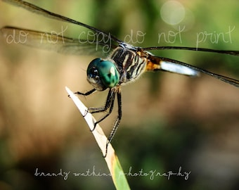 Dragonfly photograph, dragonfly photography print, 5x7 photograph, art print, fine art photography, nature photo, wildlife photography