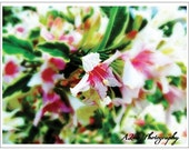 Photography Note Cards- Blank, Floral, Personalize - GiftsFromTheKitchen
