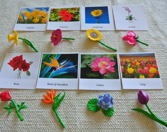 Montessori Common Flowers 3 Part Cards with Miniatures