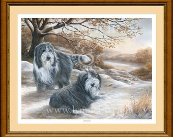 BEARDED COLLIE Limited edition fine art dog print 'Winters Glow'