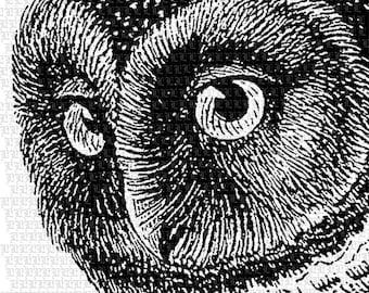 Owl Head Graphic Owl Vintage Image Bird Illustration Printable Owl Image 2343