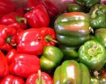 Bell Pepper Plant, Carolina Wonder Nematode Resistant  Organic