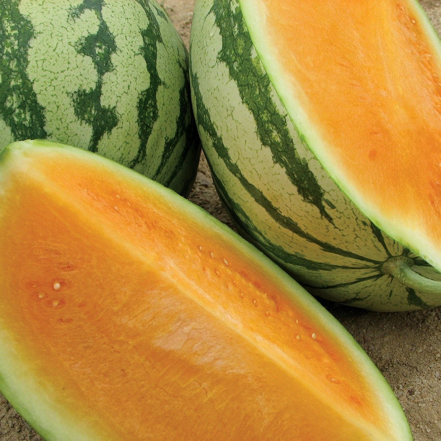 Watermelon seeds Tender Sweet non-GMO Heirloom Seeds