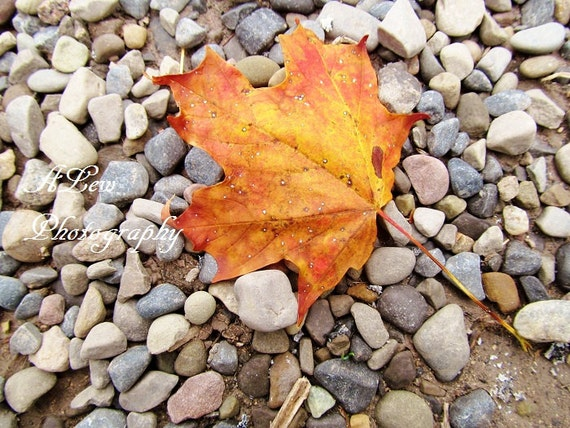 Autumn Leaf -  Photography Print Nature  Fine Art Home Decor Wall Art  Photography Fall Foliage