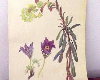 Botanical Wall Hanging Yellow Iris Clover Butterfly Book Plate vintage book page Edwardian Diary