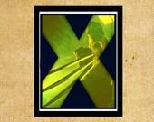 X-Men The Wolverine 8 x 10 Hugh Jackman Days of Future Past Marvel Art Print Typography
