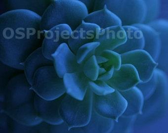 Blue succulent - Fine Art Photography  - Botanical Home decor - Blue green Wall Art