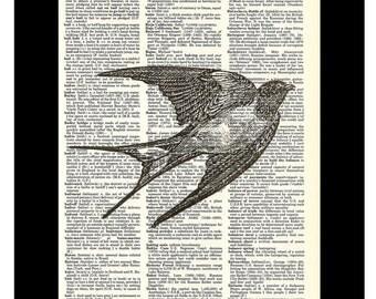 Swallow Bird in Flight  Vintage Etching Dictionary Art Print