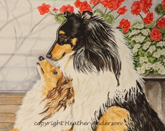 """8x10 Giclee Print, 2 Shelties, """"Getting to Know You"""",  Hand Drawn Art, Sable, Tricolor Shetland Sheepdogs"""
