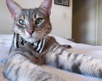 Classy cat white shirt collar & black/white striped bowtie