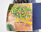 5 Lemon Bonsai Tree Seeds (USA Seller) Free Shipping