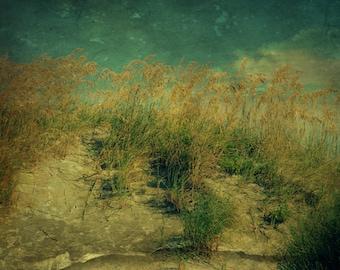 Sand Dunes at Tybee