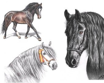 YOUR HORSE portrait drawing