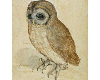 Durer - Little Owl, 1508 fine art print in choice of sizes