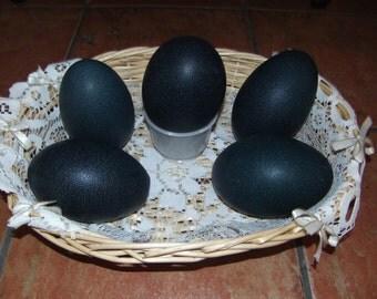 Empty emu egg