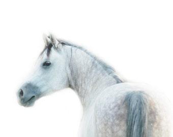 Ethereal- White Arabian Horse Art Print