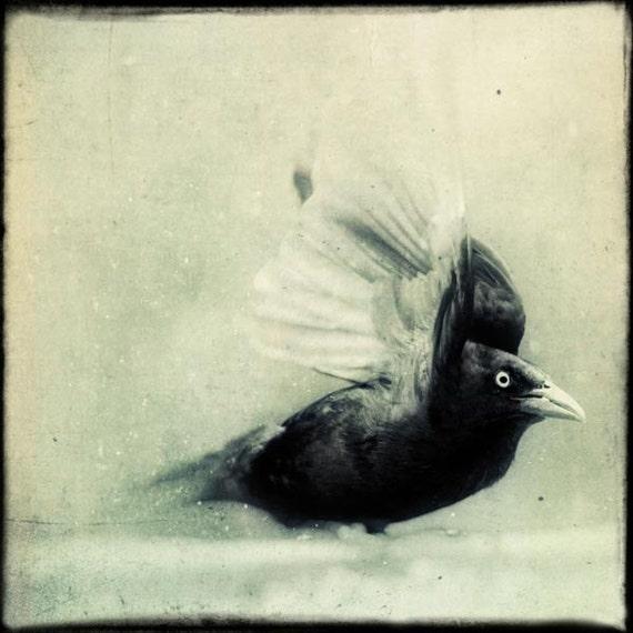 Raven Bird Art, Crow Art, Halloween Decor, Black and White Photograph, Spooky Gothic Art, Black Bird Print, Grackle No. 4