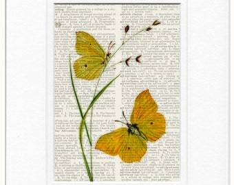 botanical butterfly print
