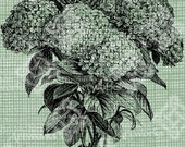 Digital Download Hydrangea image Antique Illustration, digi stamp, digital stamp, Elegant, and beautiful flowers