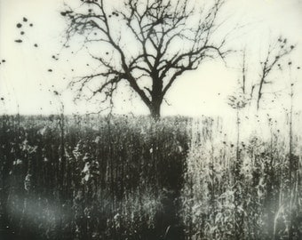 Polaroid Style Photographic Print – Bleak Tree Landscape – OOAK Ready to Frame