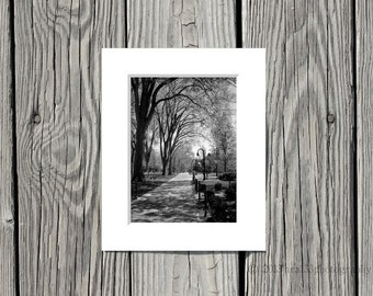 Black and White Photograph, Penn State Photo, Elm Trees, Path, Campus, 5x7 inch Print Matted to 8x10 inches -Timeless