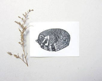 Nestled Raccoon - Linocut 5 x 7 inches Hand Pulled Print
