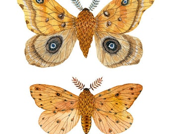 Silk and Sallow Moth Specimens Print,  giclee print, butterflies and moths illustrations, art