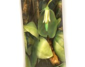 "SILK SCARF  -  ""Yucca"" Fine Art Nature Image on Habotai Silk  - 14"" x 72"" - wearable art"
