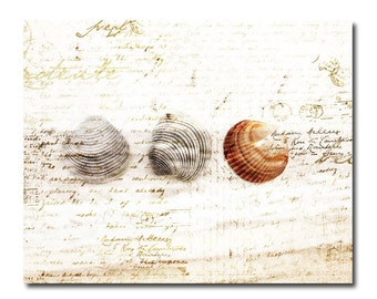 Cottage Style Seashell Print Clam Shells Nature Beach Art