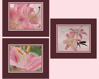 Stargazer Lily Photos, Photo Collection, Pink Lily Collection, Cottage Florals Art, Photo Wall Art, Garden Floral Art, Garden Lilies Art