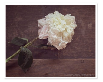 White Peony Photograph, Flower Photography, Rustic, Country Chic Decor, Withering Flower, Decay, Dark Moody, Floral, Spring, Flower Picture