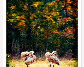 Synchronized Preening - Bird Photo - Animal Photograph - Color Photography - Fall Foliage - Wildlife Photography