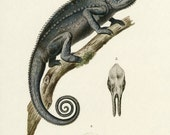 Sale Bookplate Iguana Natural History Buy 3, get 1 Free