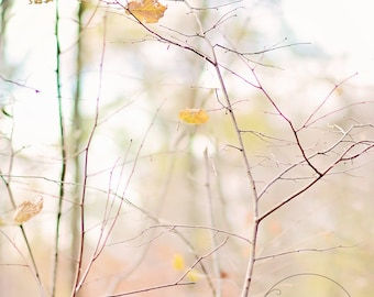 I heart fall autumn -pastel fall - fall photography - autumn decor - autumn photo (5 x 7 Original fine art photography prints) FREE Shipping