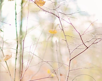 I heart fall autumn -pastel fall - fall photography - autumn decor - autumn photo - Original fine art photography prints - FREE Shipping