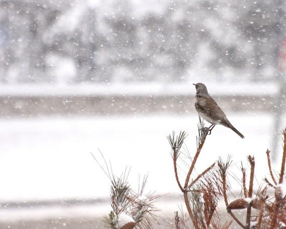 Digital download Bird under snow Winter photography snowy weather photo