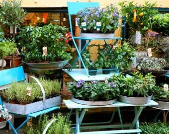 Flower Market Photography - Copenhagen Photograph Urban Garden Home Decor Plants for  Turquoise Blue Chairs Butter Yellow Wall