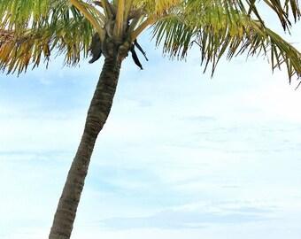 Ocean Photography, Palm Tree, Beach, Tropical Decor, Travel, Spa