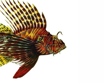 Lionfish Portrait Nautical Vintage Style Art Print Fish Beach House Decor