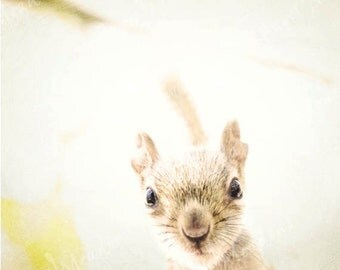 Baby Animal Nursery Photography Download, Squirrel Photo, Animal Photography, Squirrel Print, Woodland Animal, Nursery Animal Digital Print