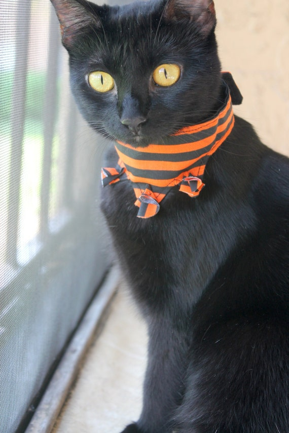Black cat with orange stripes