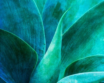 Blue Agave Art, Southwest Art, Aqua Wall Art, Teal Art, Cactus Photography, Fine Art Photography, Nature Photography, Desert Home Decor