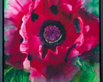 Pink Oriental Poppy, 16X20