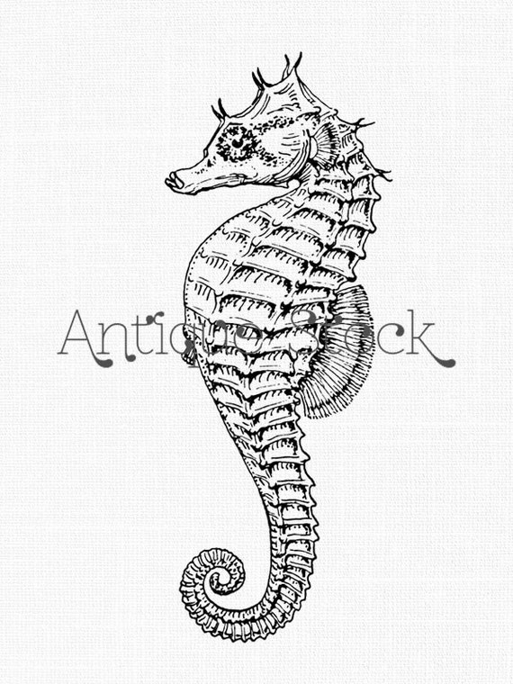 Seahorse Clipart Vinta...