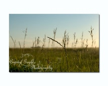 Sunrise Country Photography, Wild Grass Print, Wheat Field, Country Chic, Nature Themed Wall Print, Home Staging Accent, Farmhouse Decor