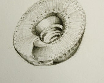 Shell - number 6 - Original drawing on acid free paper Canson  - Pencil graphite wash, pencil, charcoal by Cristina Ripper