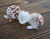 Heart Hair Barrette - Handmade Seashell Hair Accessory - Natural Seashells - Scallop Seashells - Starfish Hair Accessory